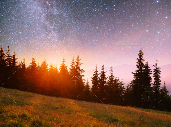 Fantastic starry sky and the milky way above the pinnacles of the pines - Stock Photo - Images
