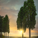 Cypress trees in Certaldo canonica park at sunset. Florence, Tuscany, Italy - PhotoDune Item for Sale
