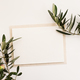 Blank paper and olive branches - PhotoDune Item for Sale