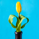 yellow tulip flower on vertical cyan background - PhotoDune Item for Sale