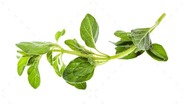 twig of fresh Oregano herb isolated on white - Stock Photo - Images