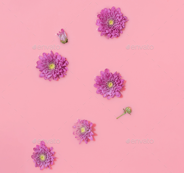 Summer scene with pink daisy flower in paint. Sun and shadows. Minimal nature background.