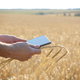Farmer uses his tablet pc at ready for harvest wheat field - PhotoDune Item for Sale