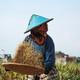 Woman Farmer - PhotoDune Item for Sale