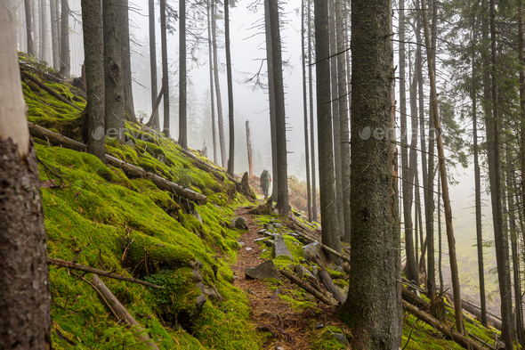 Hike in the forest - Stock Photo - Images