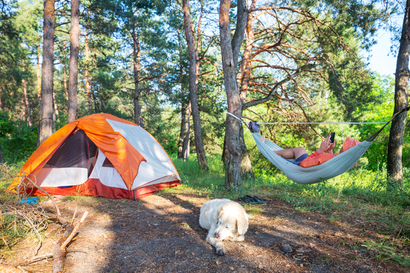 Hammock in the forest - Stock Photo - Images