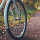 Vintage bicycle in autumn forest - PhotoDune Item for Sale