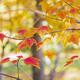 Autumn tree leaves - PhotoDune Item for Sale