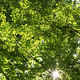The bright sun shining through the green foliage of tall trees - PhotoDune Item for Sale