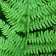 Fern background - PhotoDune Item for Sale