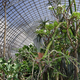 Interior of a vintage greenhouse - PhotoDune Item for Sale