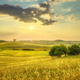Sunset landscape in Maremma. Rolling hills and trees. Bibbona,Tuscany, Italy - PhotoDune Item for Sale