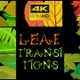 Leaf Transitions - VideoHive Item for Sale