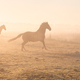 galloping horses on misty pasture - PhotoDune Item for Sale