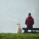 Rear view of young man with dog on lake lakeshore - PhotoDune Item for Sale