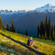 Mountains in Washington - PhotoDune Item for Sale