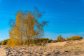 Yellow birch trees in semi-desert in autumn - PhotoDune Item for Sale