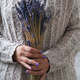 Woman holding dry lavender flowers - PhotoDune Item for Sale