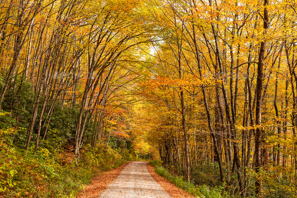 Forest Road in Autumn Season - Stock Photo - Images