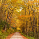 Forest Road in Autumn Season - PhotoDune Item for Sale