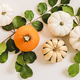 Autumn floral layout with colorful pumpkins and leaves, wide composition - PhotoDune Item for Sale