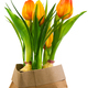 Spring deco with tulips isolated on white - PhotoDune Item for Sale