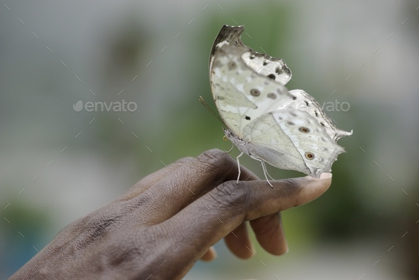 Freindly White butterfly on gentle woman black hand - Stock Photo - Images