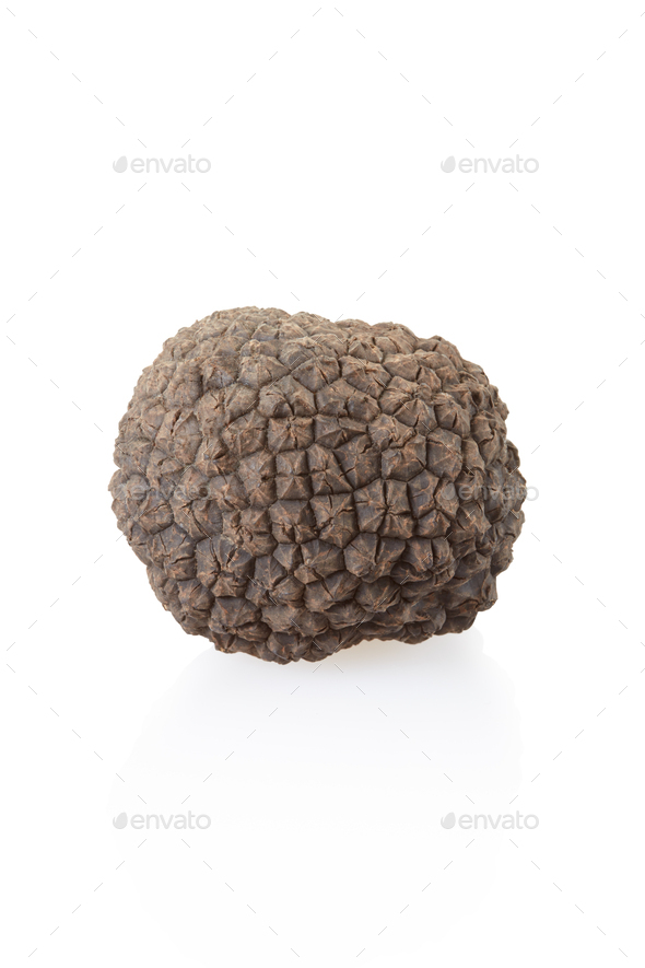 Small black truffle isolated on white, clipping path included - Stock Photo - Images