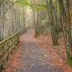 A wooden path covered in fallen leaves - PhotoDune Item for Sale