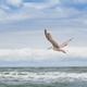 seagull flying - PhotoDune Item for Sale