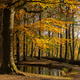 Autumn colored trees - PhotoDune Item for Sale