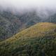 Large autumnal deciduous native forest - PhotoDune Item for Sale