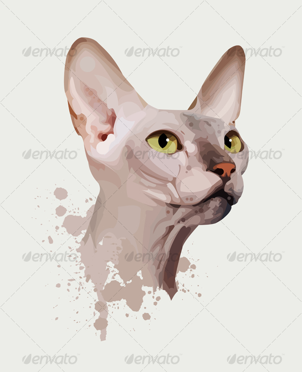 Portrait of a Cat on an White Background - Animals Characters