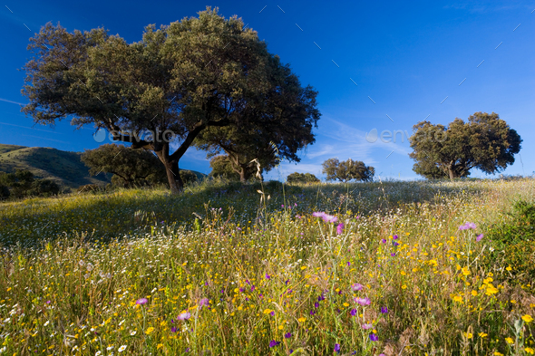 Landscape with trees and wildflowers near Guadalupe, Extremadura, Spain. - Stock Photo - Images