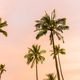 Beautiful coconut palm tree on sky with cloud - PhotoDune Item for Sale