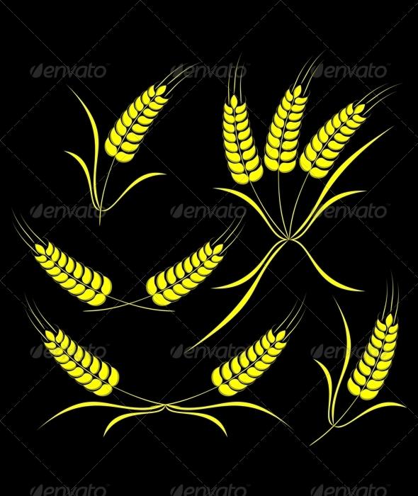 Wheat on a black background. - Decorative Symbols Decorative