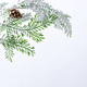 Fir tree branch with cones covered with snow on white background - PhotoDune Item for Sale