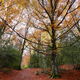 Gorgeous autumn forest in Tena Valley, Huesca province, Spain - PhotoDune Item for Sale
