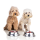 Obedient healthy dogs posing with barf raw meat, fish, vegetable, eggs, ingredient diet on white - PhotoDune Item for Sale