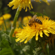 Bee On Flowers - VideoHive Item for Sale