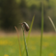 Beetle On A Blade Of Grass - VideoHive Item for Sale