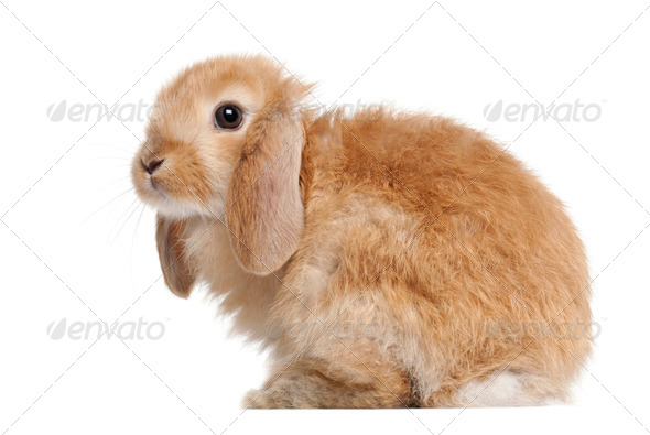Rabbit against white background - Stock Photo - Images
