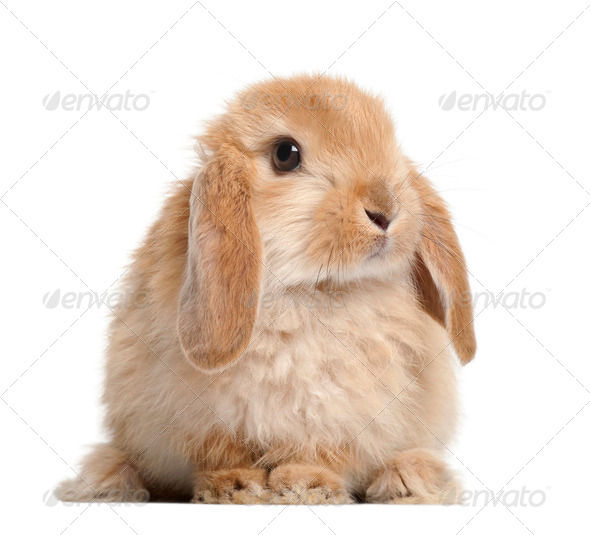 Rabbit against white background - Stock Photo - Images