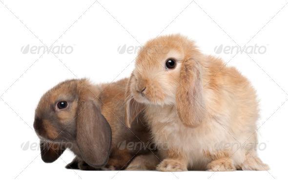 Rabbits against white background - Stock Photo - Images