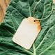 Blank paper tag and fresh Collard leafs - PhotoDune Item for Sale