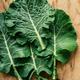 Fresh Collard leafs - PhotoDune Item for Sale