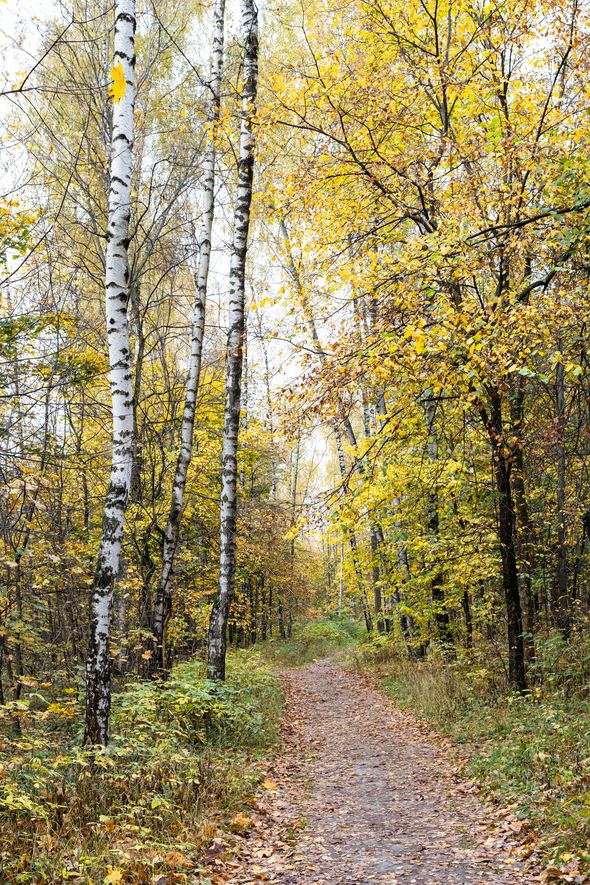 footpath between trees in city park in autumn - Stock Photo - Images