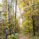 footpath between trees in city park in autumn - PhotoDune Item for Sale