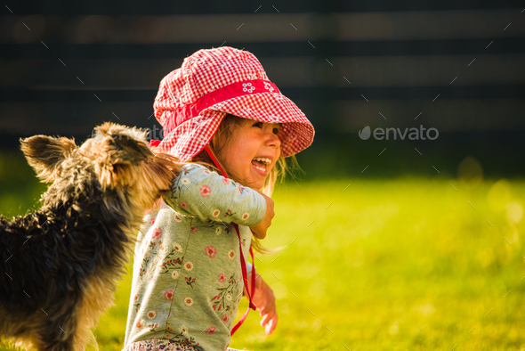 Child with a yorkshire dog ona green grass in backyard having fun. - Stock Photo - Images