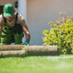 Natural Grass Turfs Installation Job - PhotoDune Item for Sale